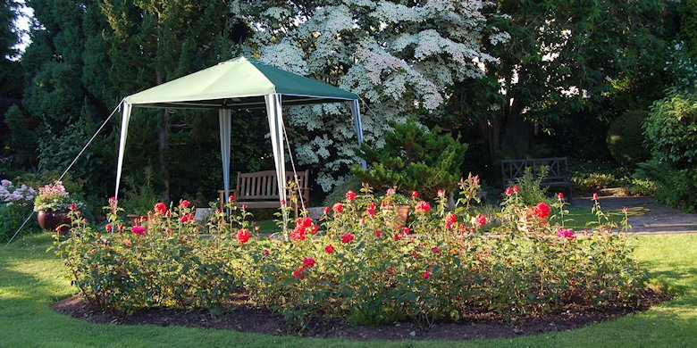 Our gazebo and rose-bed (containing 'Superstar' roses) at 7:40pm on 11th July 2013